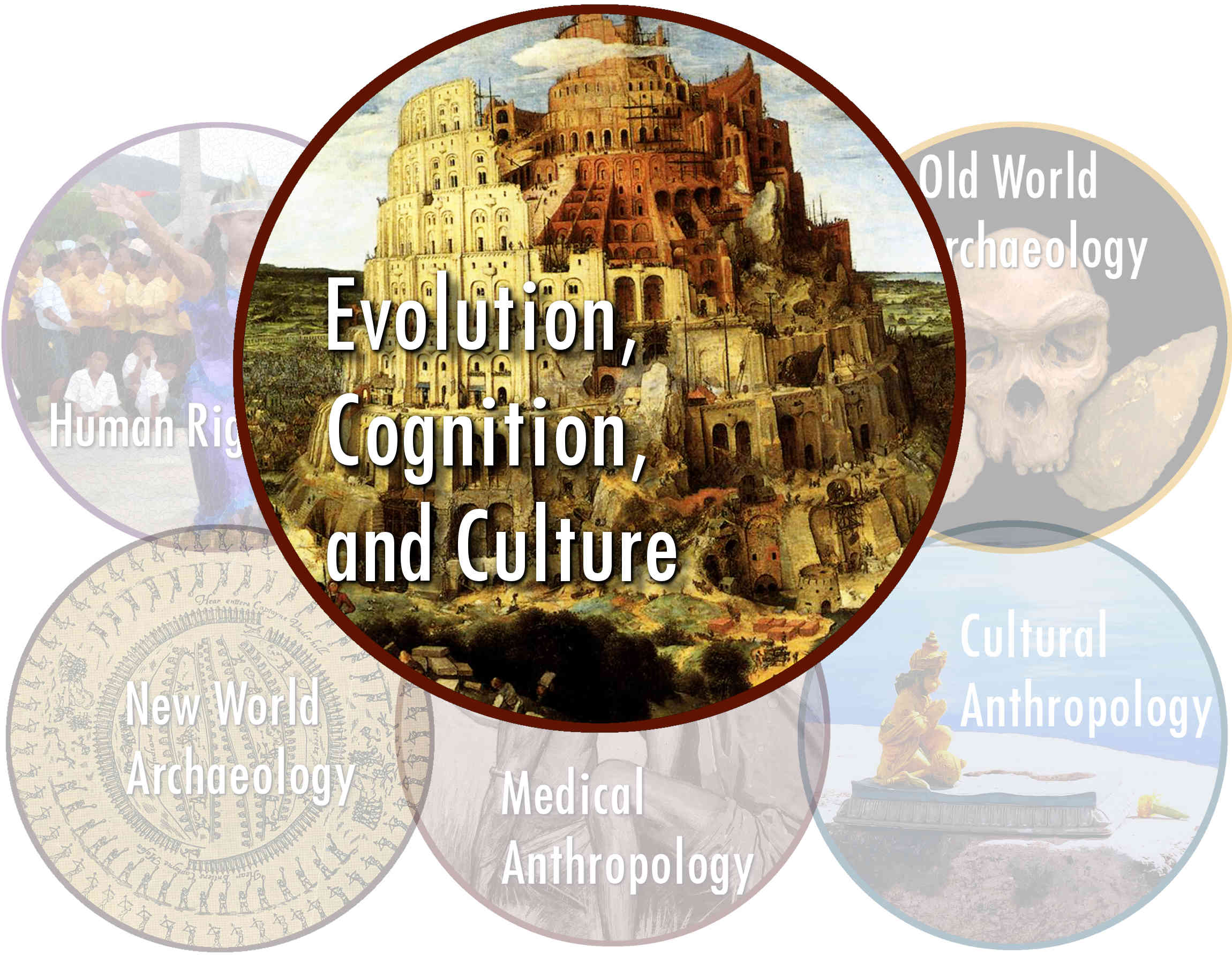 evolutionary anthro